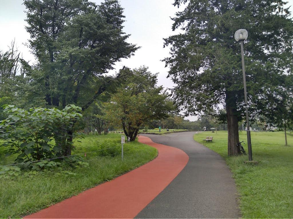 和光樹林公園800mコース